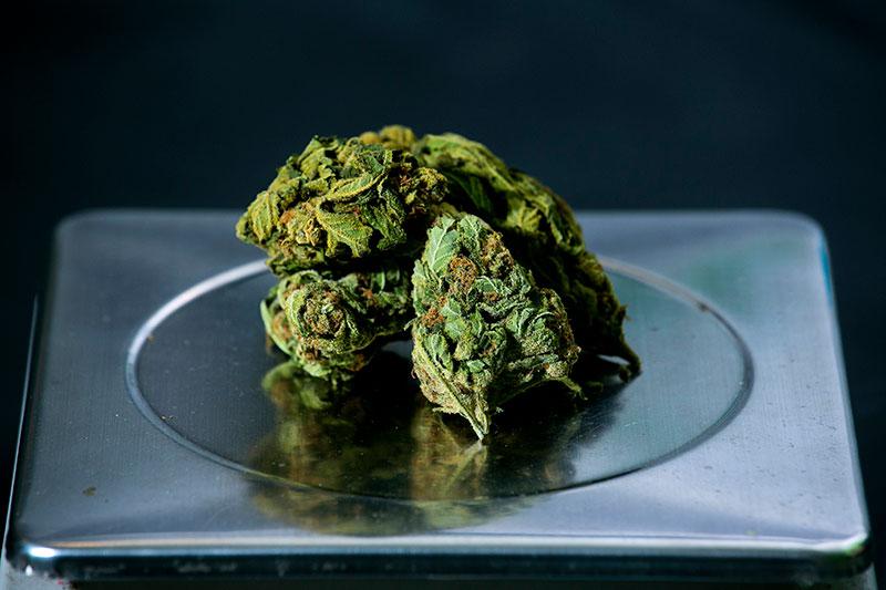 cannabis RoseUp Association Face aux cancers osons la vie © Olivier Fitoussi