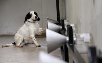 Les chiens de K-Dog sont entrainés à détecter des cancers du sein - rosemagazine - roseupassociation