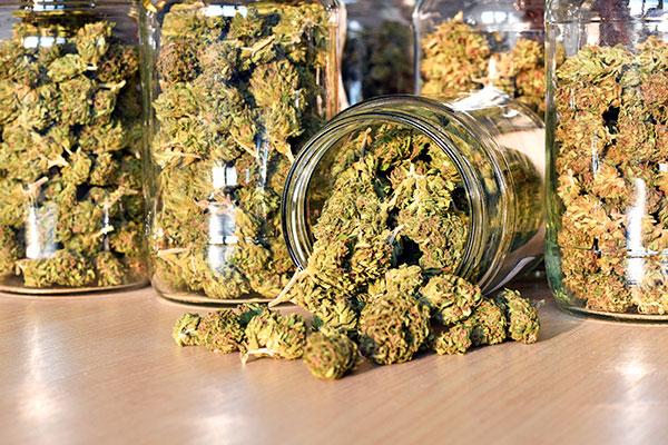Plant de cannabis ©Eldad Carim