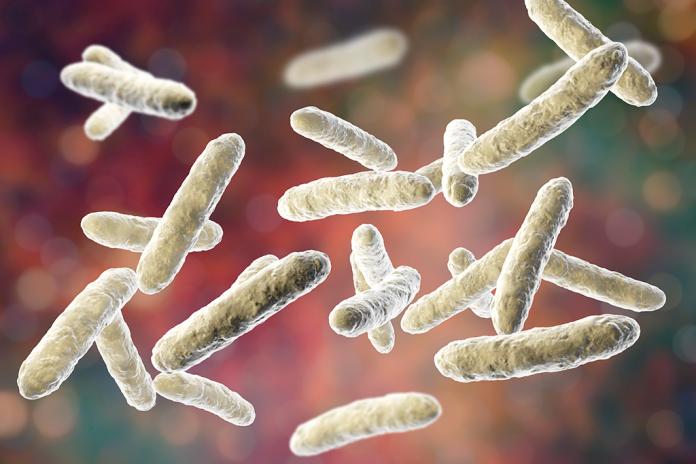 Les tumeurs hébergent un microbiote capable d'influer sur la survie des malades - roseup association